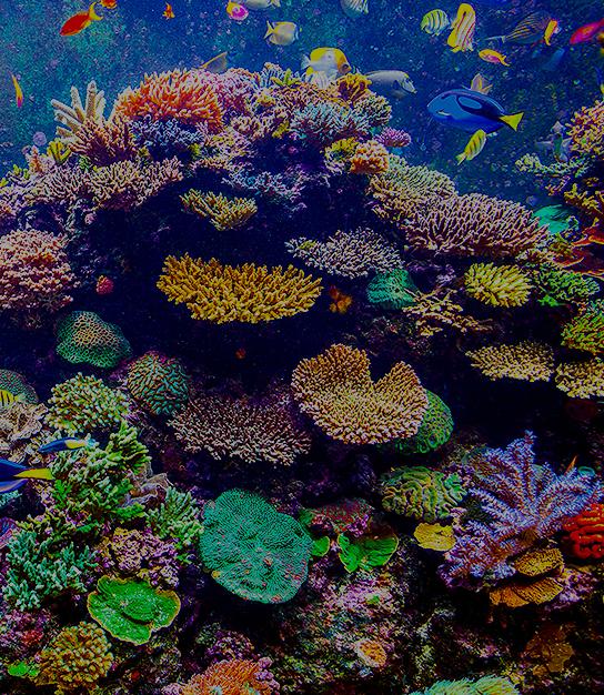 ReefBeat_image